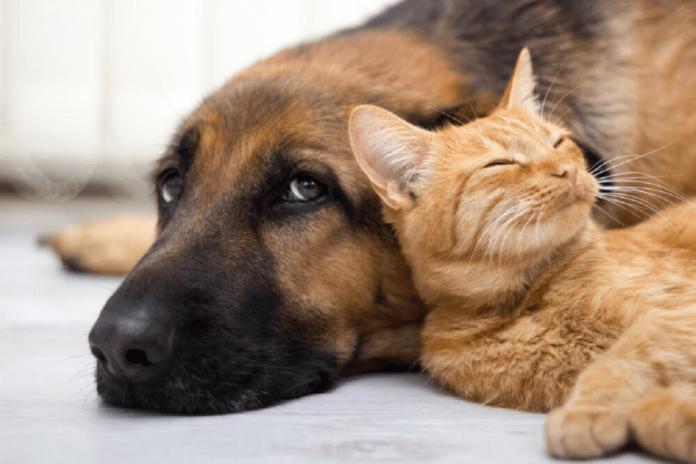 São João do Itaperiú inicia programa de castração e chipagem para cães e gatos. Foto: Reprodução